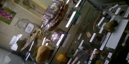 W oparach rtęci i belladony - wystawa w Muzeum